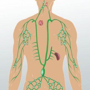limfni sistem drenaza